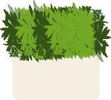 green0011005.JPG